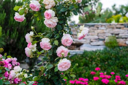 ibaritakis_loukoum_garden_may17-0651